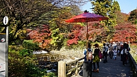 Garden next to Takano River