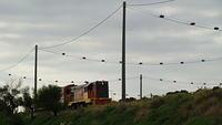 El Zorro on Rail Work