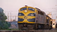 S303 leads El Zorro Grain