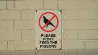 Don't feed the birds at Campsie